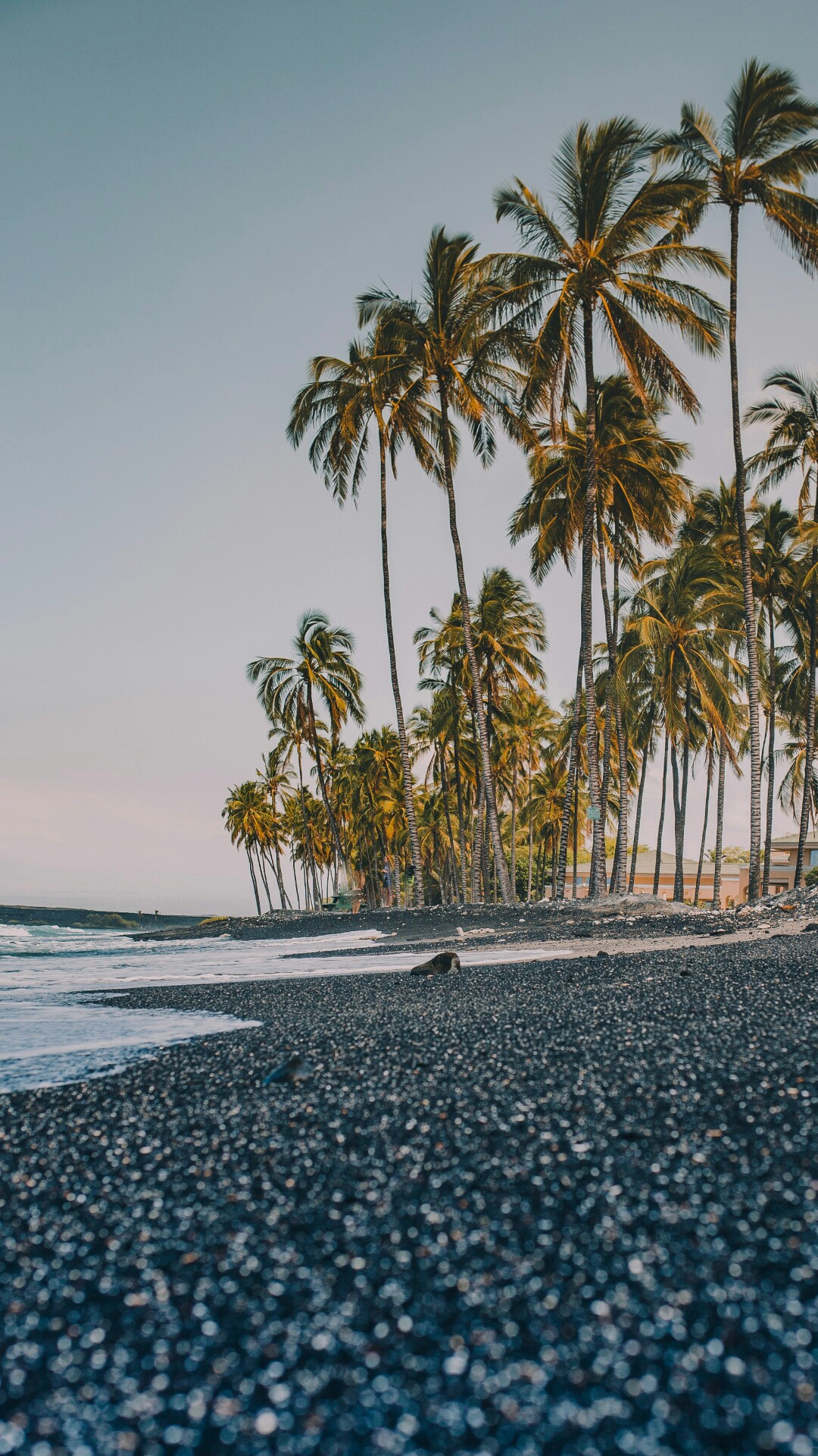 High Resolution Nature Wallpaper For Mobile Phone With Picture Of Coconut Trees On Beach Hd Wallpapers Desktop Background Mobile Phone Wallpapers