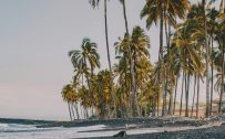 High Resolution Nature Wallpaper for Mobile Phone with Picture of Coconut Trees on Beach