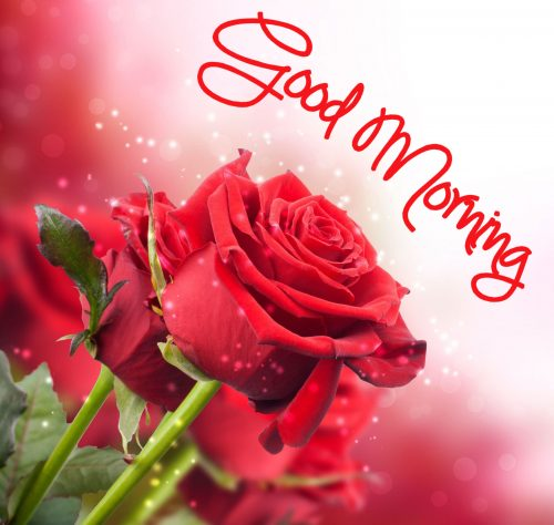 Good Morning Images with Rose Flowers in High Resolution