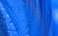 10 Blue Wallpapers That Will Look Perfect on Your Nokia 8.3 5G - #10 - Water Droplets on Feather