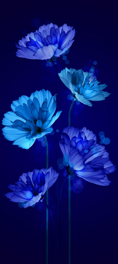10 Wallpapers That Will Look Perfect On Your Xiaomi Redmi Note 9 Pro #08 - Animated Blue Flower