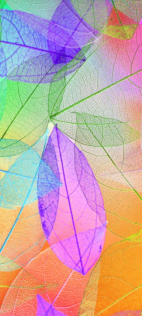 10 Best Artistic Pinterest Pins for Your Samsung A Quantum - #10 - Colorful Transparent Leaves