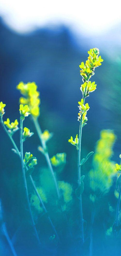 Oppo Reno4 Pro 5G Nature Wallpaper 06 0f 10 - Spring Flowers