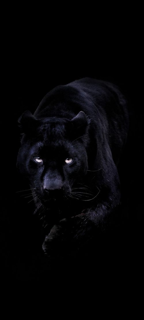 Black Wallpaper for Mobile Phone with Picture of Black Panther