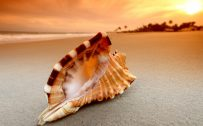 Beach Macro Photo Wallpaper with Seashell and Sunrise