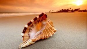 Beach Macro Photo Wallpaper with Seashell and Sunrise