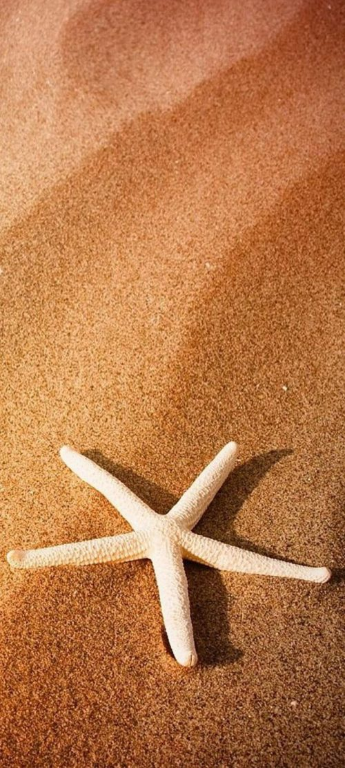 Beach Wallpaper for Phones with Starfish on the Sand